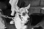 inwood_dogglasses